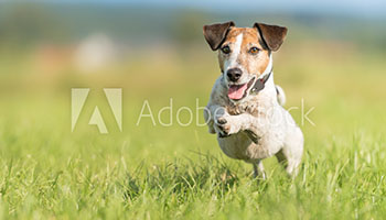 Terrier Race