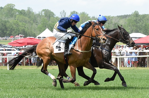 Two horses racing at Steeplechase